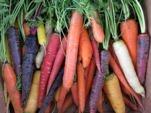 Will Isbell Carrots-closeup.jpg