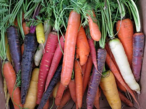 Will Isbell Carrots-closeup.jpg