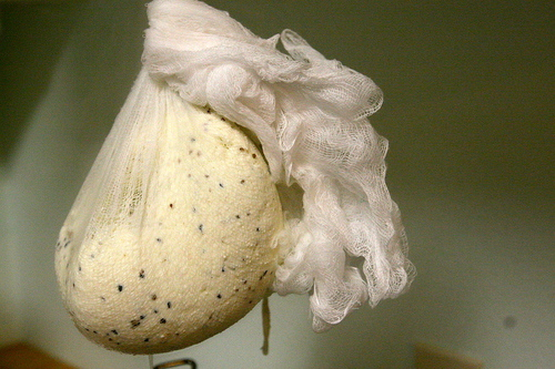 Kiran-Paneer-cheesecloth.jpg