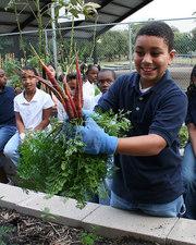 Harvesting Carrots.jpg