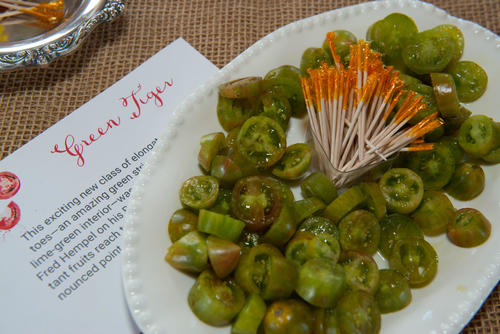Thumbnail image for Heirloom Green Tiger Tomatoes await guests at Chefs in the Field Tomato Tribute at Hope Farms.jpg
