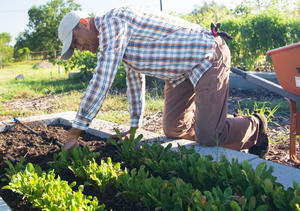 Thumbnail image for Adrian Harvesting at Hope Farms cropped.jpg